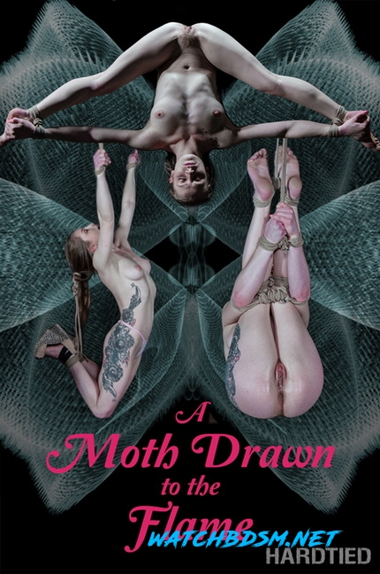 A Moth Drawn To The Flame - HD - Hardtied