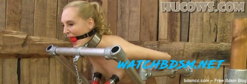 Ariel Anderssen - milked after clamps - FullHD - Hucows