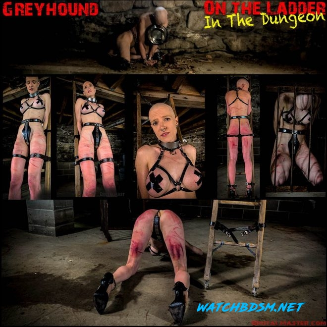 Greyhound – On The Ladder In The Dungeon - FullHD - Brutal Master