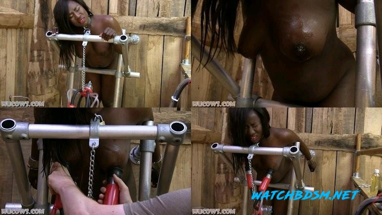 Shay - Shay in the barn - FullHD - HuCows