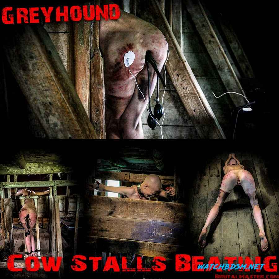 Greyhound - FullHD - BrutalMaster